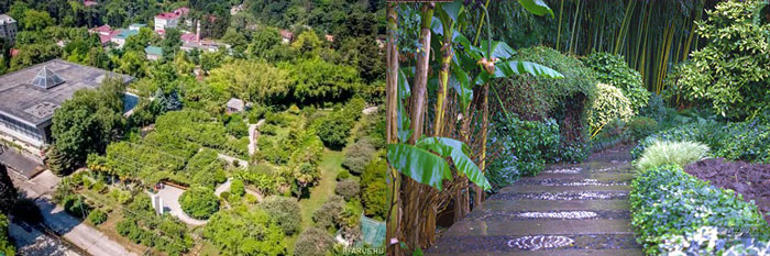 Сочи: сад-музей Дерево Дружбы