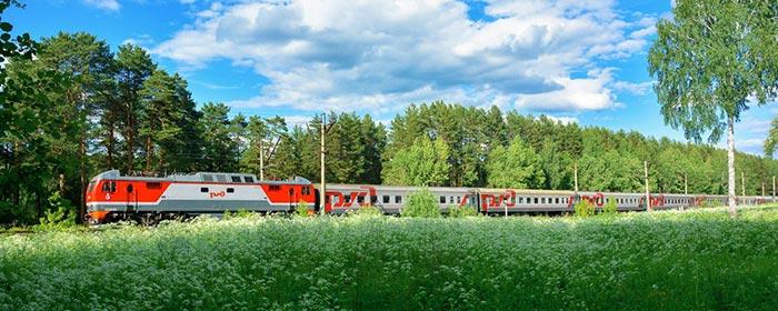 Поезд в лесопосадке