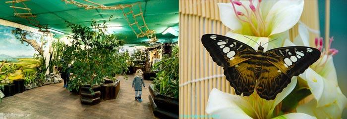 Екатеринбургский парк бабочек